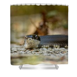 Portrait Of A Young Black Rat Snake Shower Curtain by Rebecca Sherman