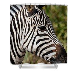Portrait Of A Zebra Shower Curtain by Maria Urso