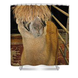 Portrait Of An Alpaca Shower Curtain by Connie Fox