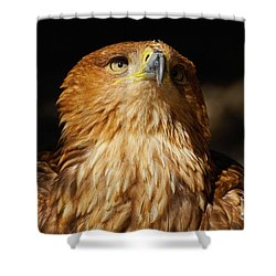 Portrait Of An Eastern Imperial Eagle Shower Curtain by Nick  Biemans