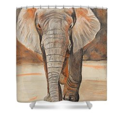 Portrait Of An Elephant Shower Curtain