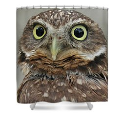 Portrait Of Burrowing Owl Shower Curtain by Ben and Raisa Gertsberg