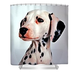 Portrait Of Dalmatian Dog Shower Curtain