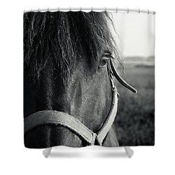 Portrait Of Horse In Black And White Shower Curtain by Peter v Quenter