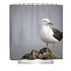 Posed Gull Shower Curtain by Anne Gilbert