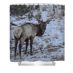 Elk Bull In Wind Cave National Park Shower Curtain