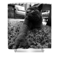 Shower Curtain featuring the photograph Posing by Laura Melis