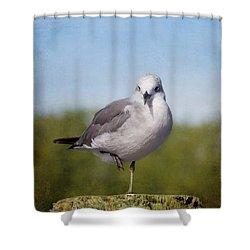 Posing Seagull Shower Curtain by Kim Hojnacki
