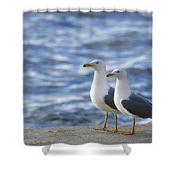 Posing Seagulls Shower Curtain