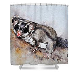 Possum Cute Sugar Glider Shower Curtain by Sandra Phryce-Jones