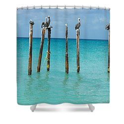 Posted Seagull Shower Curtain by David and Lynn Keller