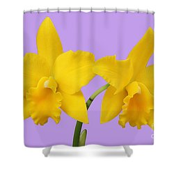 Potinara Shinfong Little Love #1 Shower Curtain by Judy Whitton