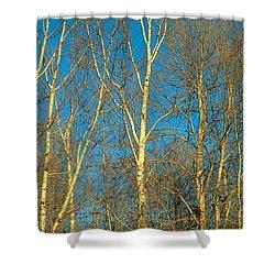 Prairie Autumn 9 Shower Curtain by Terry Reynoldson