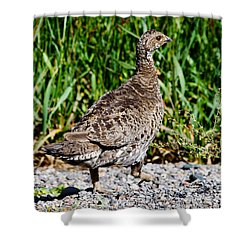 Shower Curtain featuring the photograph Prairie Chicken Run by Janice Rae Pariza