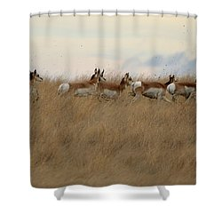 Prairie Pronghorns Shower Curtain