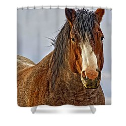 Winter's Edge Shower Curtain