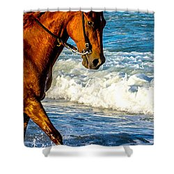 Prancing In The Sea Shower Curtain