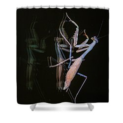 Praying Mantis 2 Shower Curtain by Angela A Stanton