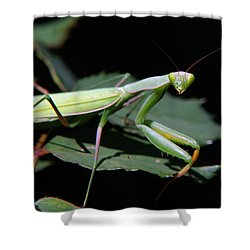 Praying Mantis Shower Curtain by Christina Rollo