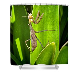 Shower Curtain featuring the photograph Praying Mantis by Kasia Bitner