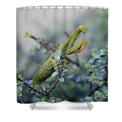 Praying Mantis Shower Curtain