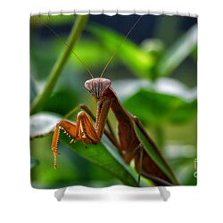 Shower Curtain featuring the photograph Praying Mantis by Thomas Woolworth