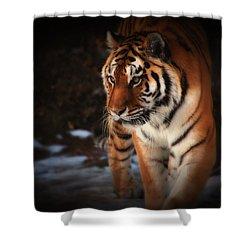 Precious Shower Curtain by Karol Livote
