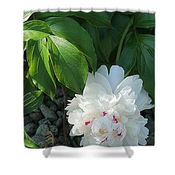Precious Peony Shower Curtain
