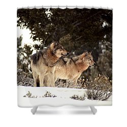 Predators Shower Curtain by Sharon Elliott