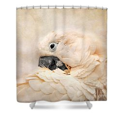 Preening Shower Curtain by Jai Johnson