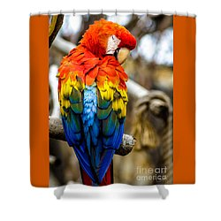 Preening Scarlet Macaw Shower Curtain