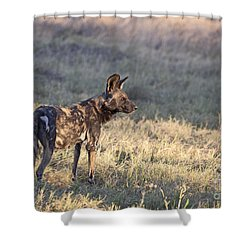 Shower Curtain featuring the photograph Pregnant African Wild Dog by Liz Leyden