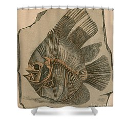Prehistoric Fish Platax Altissimus Shower Curtain by Science Source