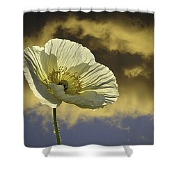 Prelude To Spring Shower Curtain by Lynn Bauer