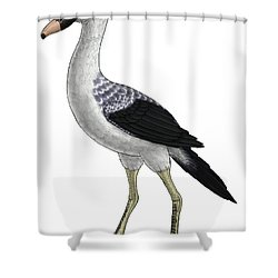 Presbyornis, An Extinct Genus Shower Curtain by Vitor Silva