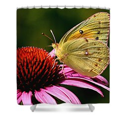 Pretty As A Butterfly Shower Curtain