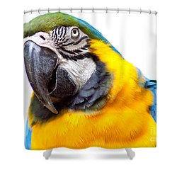 Shower Curtain featuring the photograph Pretty Bird by Roselynne Broussard