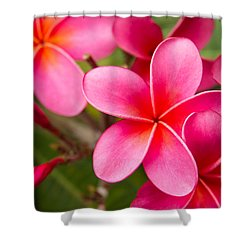 Pretty Hot In Pink Shower Curtain by Denise Bird