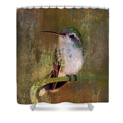 Pretty Hummer Shower Curtain
