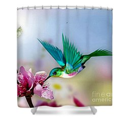 Pretty Hummingbird Shower Curtain