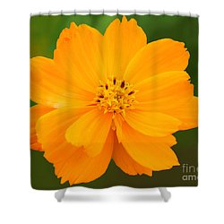 Pretty In Orange Shower Curtain by Mariarosa Rockefeller