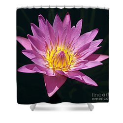 Pretty In Pink And Yellow Water Lily Shower Curtain by Sabrina L Ryan