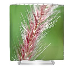 Shower Curtain featuring the photograph Pretty In Pink by Bianca Nadeau