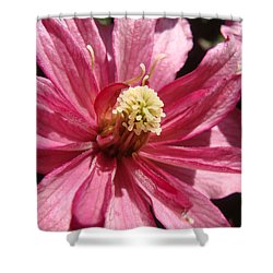 Shower Curtain featuring the photograph Pretty In Pink by Cheryl Hoyle