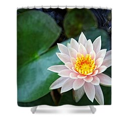 Pretty In Pink Shower Curtain by Dave Files