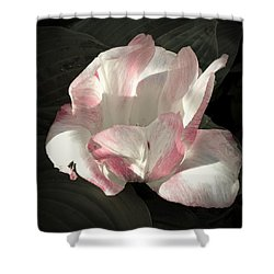 Shower Curtain featuring the photograph Pretty In Pink by Photographic Arts And Design Studio