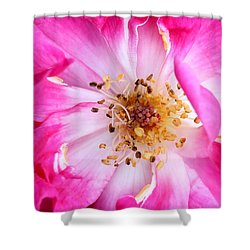 Pretty In Pink Rose Close Up Shower Curtain by Sabrina L Ryan