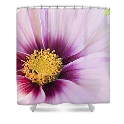 Pretty In Pink Shower Curtain by Tara Lynn