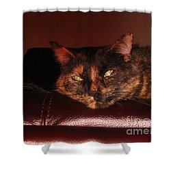 Pretty Kitty Shower Curtain by Oksana Semenchenko