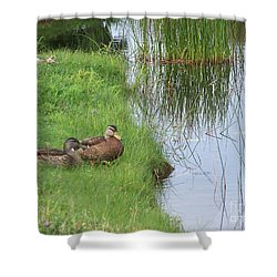 Shower Curtain featuring the photograph Mated Pair Of Ducks by Eunice Miller